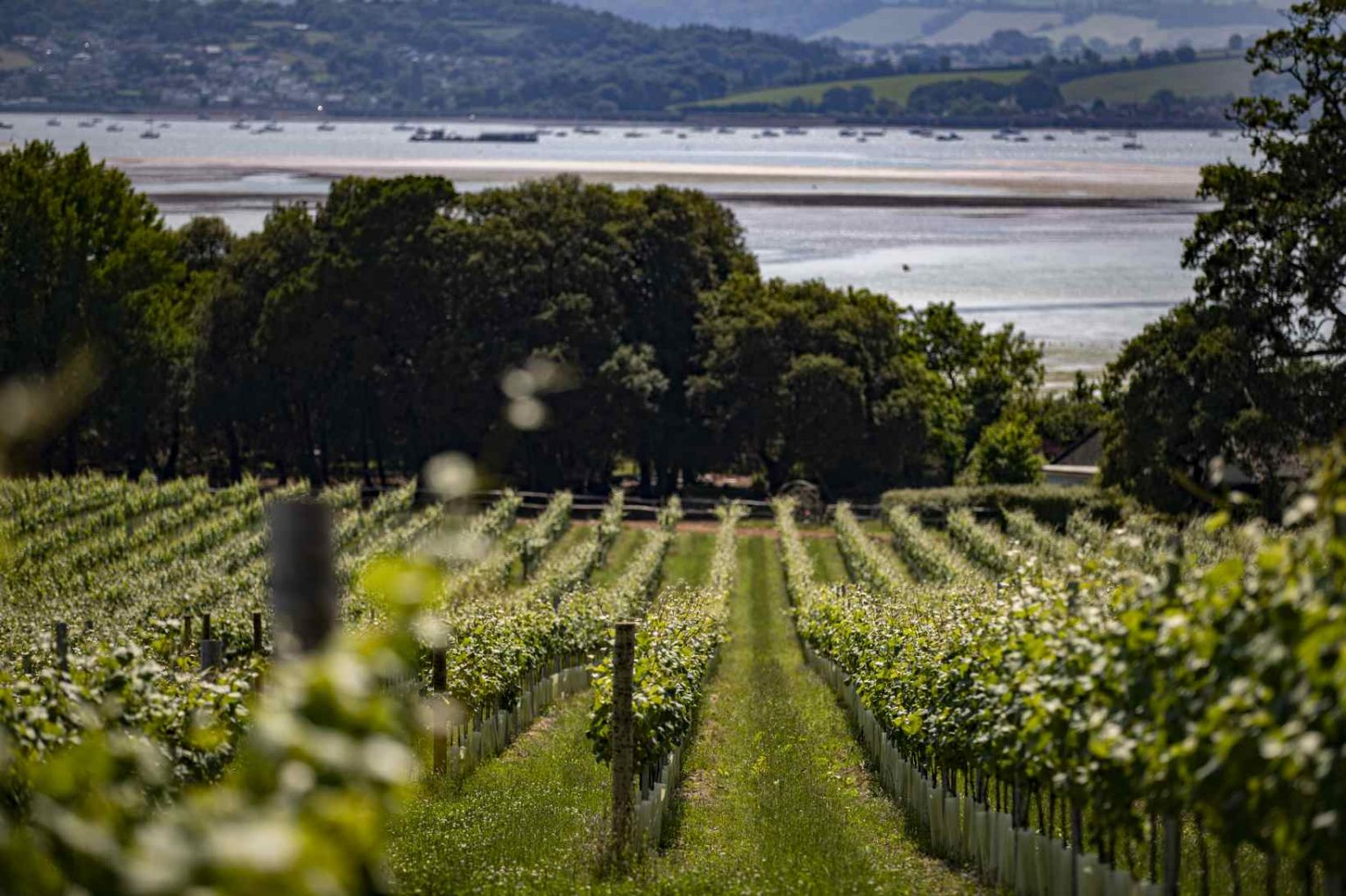 Lympstone Manor vineyard view Devon