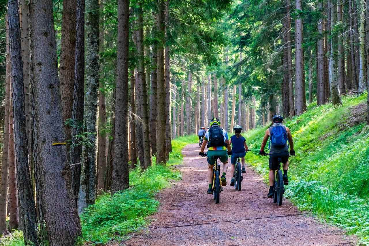 E biking forest