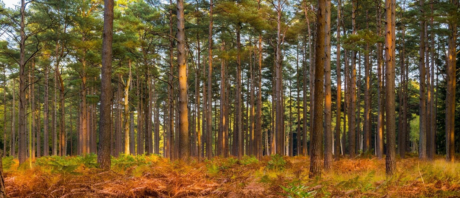 New Forest Hampshire