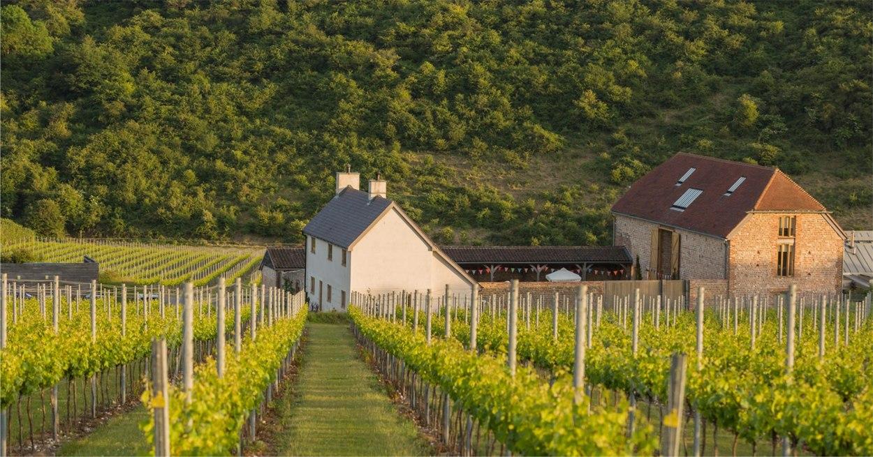 Rathfinny sussex winery